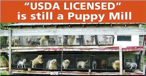 usda puppy mill list 25 best ideas about puppy mills on puppy mill