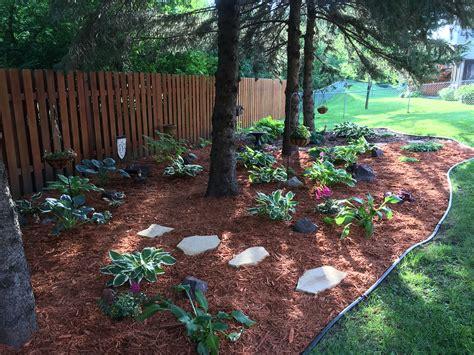 brand new pine trees landscaping uu97 roccommunity