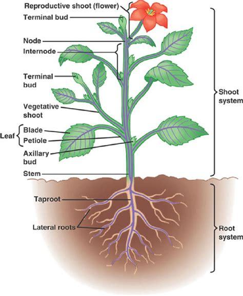 diagram of a diagrams of a plant diagram site