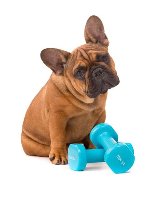 puppy needs let s talk how many calories a needs per day top tips