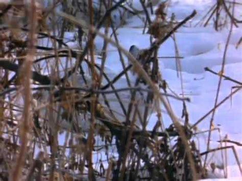 best documentaries investigating hibernation 1972 where do animals go in winter