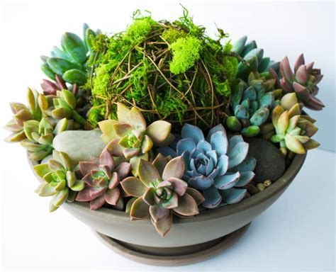 succulent planter diy vibrant succulent planter kelley and cricket