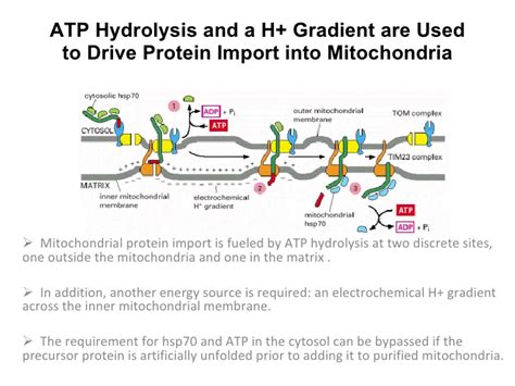 protein transport transport of proteins