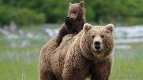 imagenes animales con sus crias datos asombrosos de las incre 237 bles madres del reino animal
