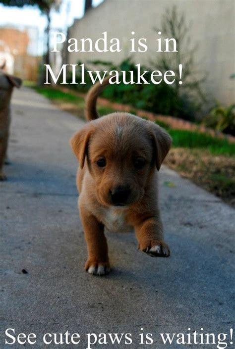 funny puppy memes www pixshark com images galleries