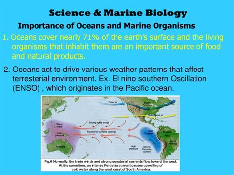 Ppt Science Marine Biology Powerpoint Presentation Id 6810956 Marine Biology Powerpoint