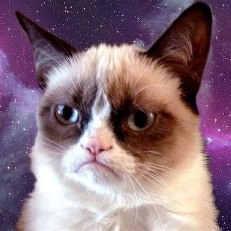 grumpy cat wallpaper iphone galaxy cat wallpaper wallpapersafari