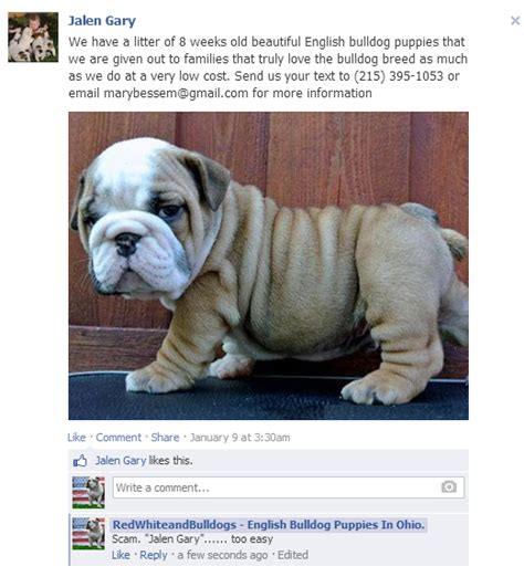 puppy scams puppy scams rising