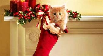 10 useful christmas gift ideas for your cat