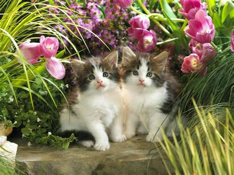 wallpaper of cat download most beautiful cats wallpapers hd photos images download
