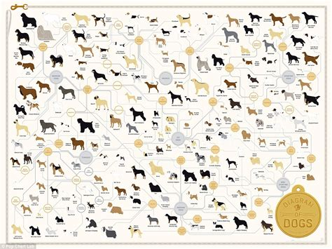 dogs types the family tree of dogs infographic reveals how every breed is related daily mail