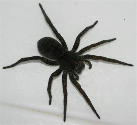 Basement In San Diego by Spiders At Spiderzrule The Best Site In The World About