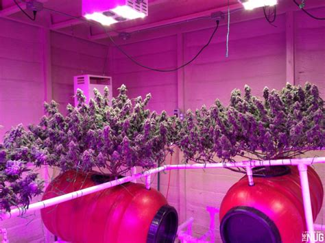 what grow lights will give you the best quality marijuana