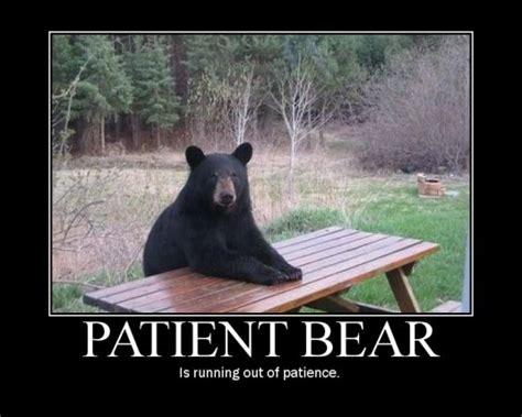 Patient Bear Meme - the patient bear story oneplus forums