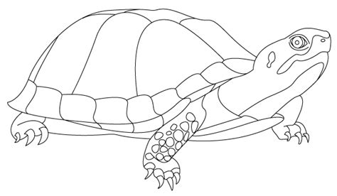 free coloring pages of snapping turtles