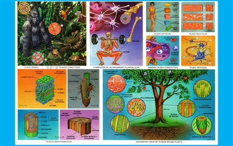 tejidos animales y vegetales tejido animal y vegetal imagenes wallpapers laminas
