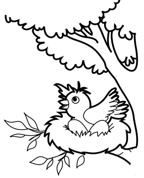 coloring pages of birds in trees bird s nest on a tree printable picture to print or