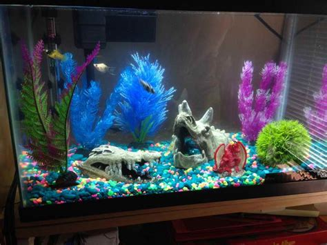 Colorful Fish Tanks Planning Ideas Best Fish Tanks Pics For Decoration