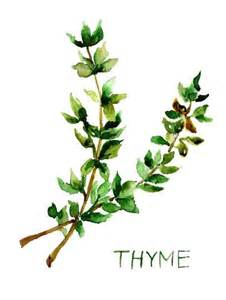 Image result for free pics of thyme