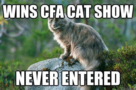 Cfa Meme - wins cfa cat show never entered ridiculously photogenic
