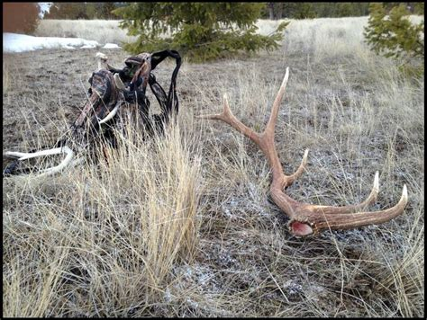 elk shed in wyoming when