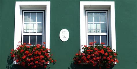 piante antizanzare da giardino 10 piante antizanzare da balcone e giardino