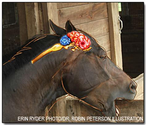Cribbing Horses Treatment by Brain Dysfunction In Cribbing Horses Gives Researchers