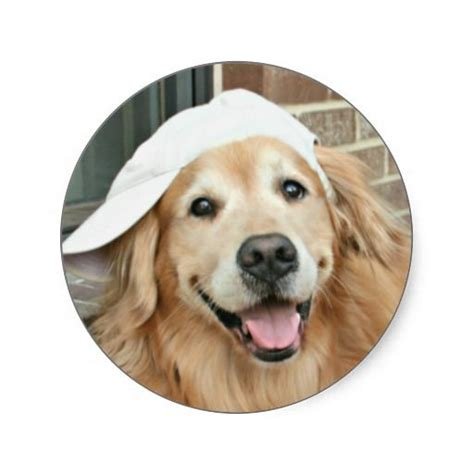 golden retriever baseball 18 best images about golden retrievers on beautiful the cross and search