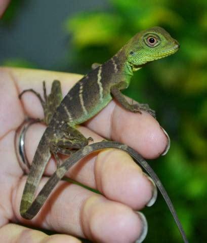 Baby Turtle Supplies – Baby Kinkajou   Underground Reptiles
