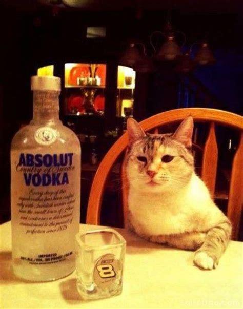 Cat Sitting At Table Meme - 还愣着干嘛 给喵爷我倒酒啊 搞笑图片盒子