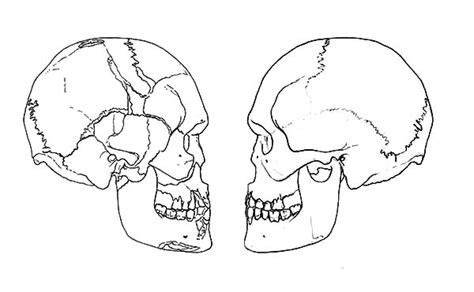 human skull coloring page heart skull coloring pages sketch coloring page