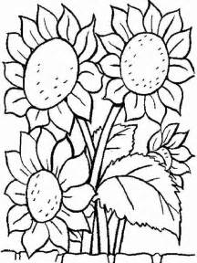 sunflower coloring pages sunflower coloring pages and print sunflower
