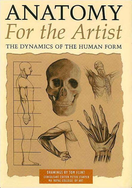 anatomy for the artist the dynamics of the human form by tommy flint paperback barnes noble 174