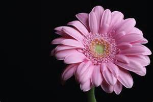 flowers photography by almaskari on deviantart