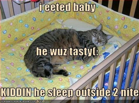 56 best lol cats images on pinterest cute kittens funny