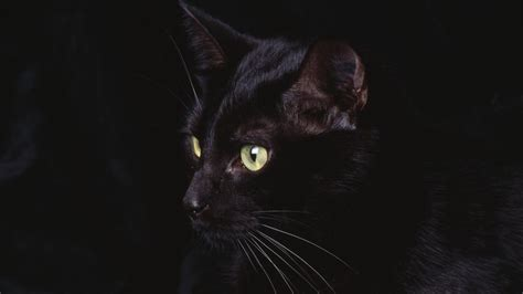 desktop wallpaper black cats black cat background wallpapersafari