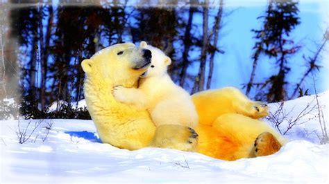 Imagenes De Invierno Con Animales | asombrosas fotos de paisajes con animales banco de