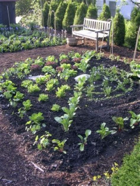 garden fall planting fall vegetable planting guide