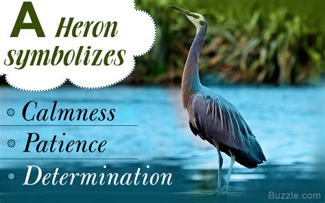 What A Heron Symbolizes The Meanings Are Compiled Right Here Blue Heron Meaning