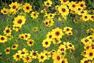 Yellow Tx Yellow Wildflowers Flickr Photo