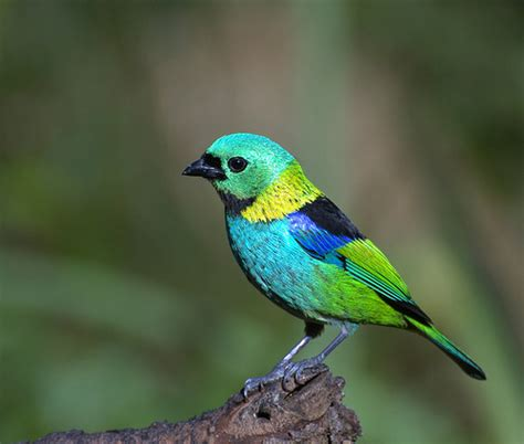 colorful bird pictures 22 photos of brightly colored birds
