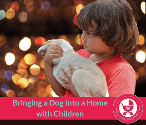 how to bring a puppy home bringing a into a home with children how to do it successfully