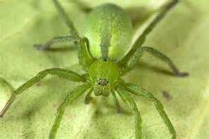 White Garden Spider Uk Uk Spider Identification 17 Common Spiders You