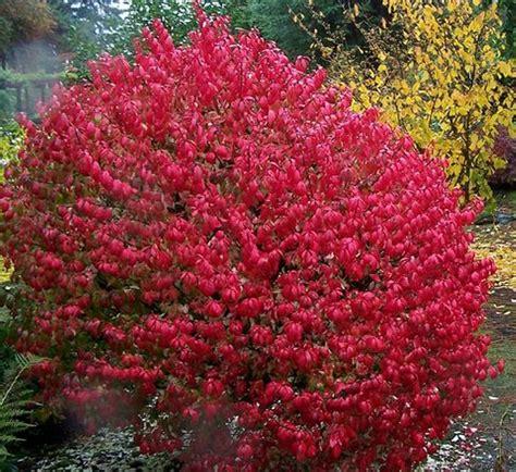 The Burning Bush burning bush s dazzle lies harm to species