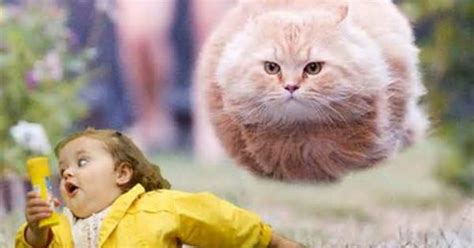 Fat Girl Running Meme - chubby bubble girl meme yahoo image search results a