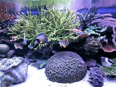 aquarium len who wants to see a 870 gallon reef the reef tank