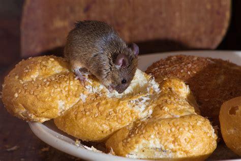mice food gallery