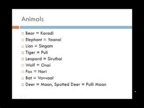 learn tamil  english lesson  animals birds youtube