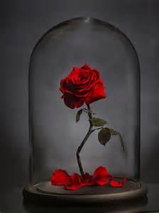 roses that last forever foreve rose fashion world magazine