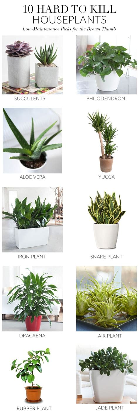 indoor plants no sun 1000 ideas about good indoor plants on pinterest best